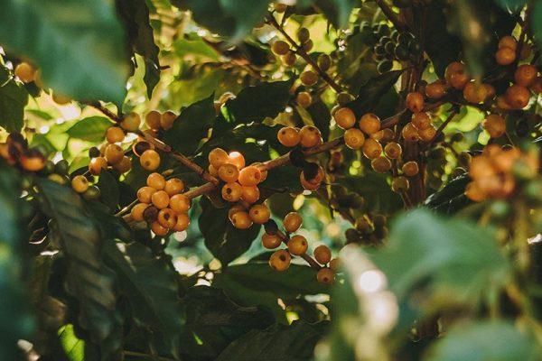 amarelo-foto1