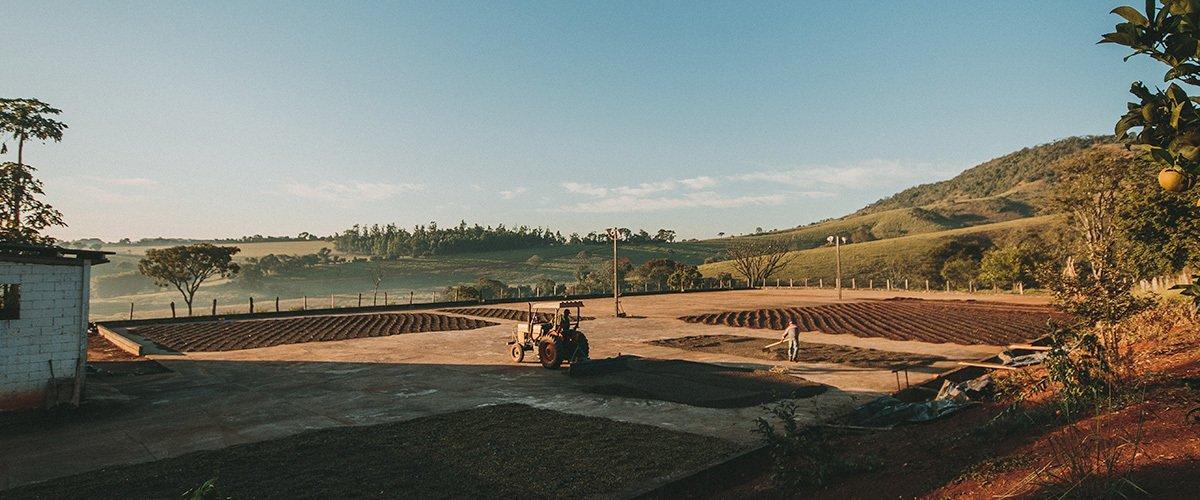 Origem do café: onde surgiu o grão mais brasileiro do mundo?