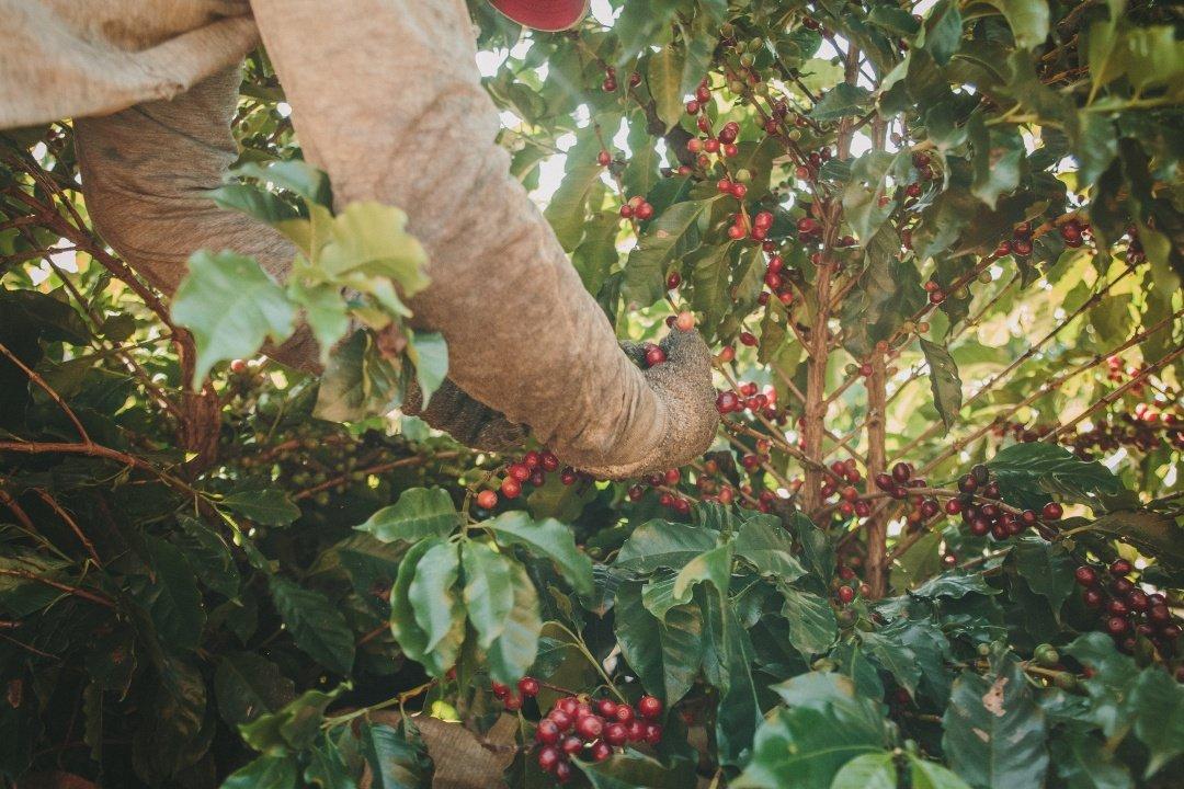 Cafés especiais em Minas Gerais: Conheça os melhores