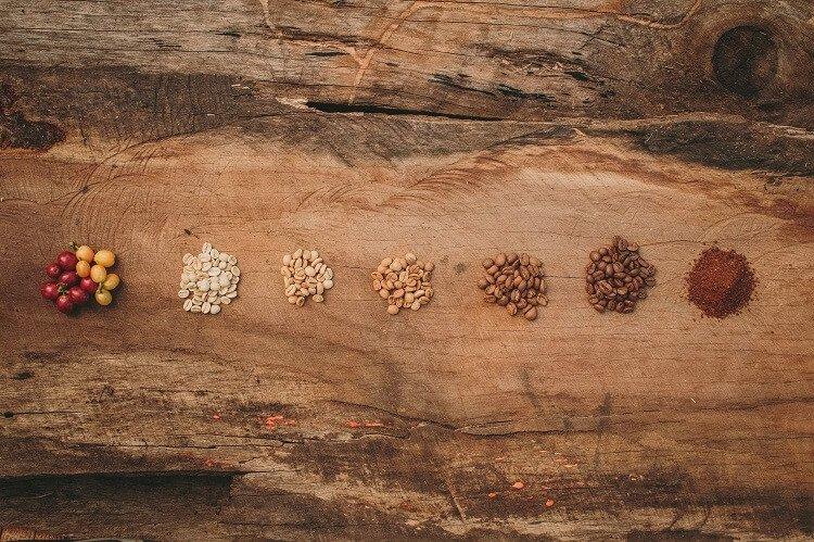 Processo de produção do café: como funciona?