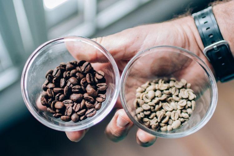 comparação grãos de café cafeinado e descafeinado.